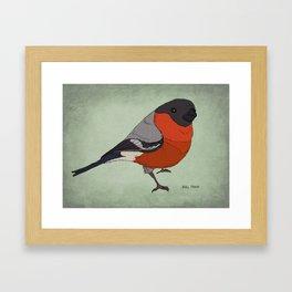 The Bullfinch Framed Art Print