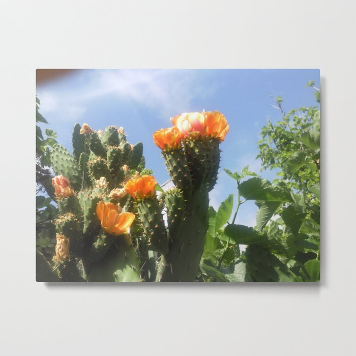 Blossoms in the Spring Metal Print