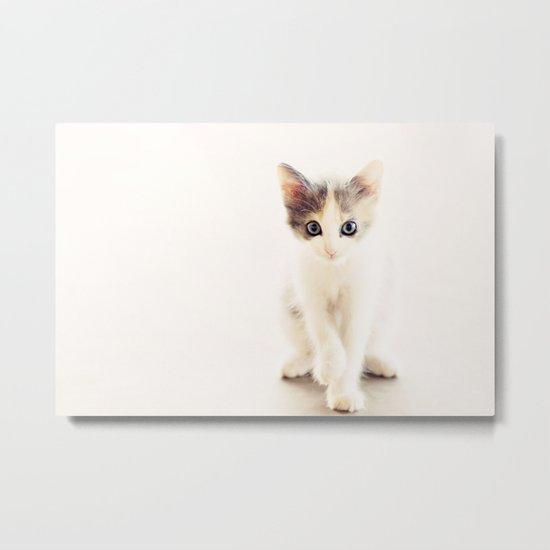 White and Grey Kitten Metal Print