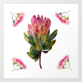 Protea Botanical Art Print