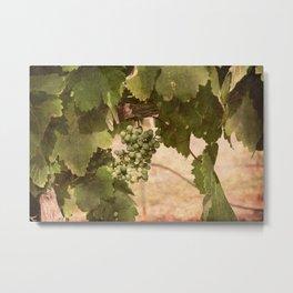 Lost Oak Vineyard Metal Print