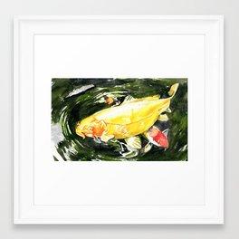 Koi carp  Framed Art Print