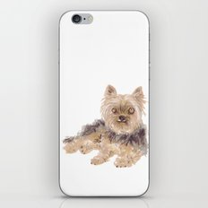 Yorkshire Terrier iPhone & iPod Skin