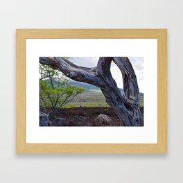 Tree and Maui Lava Flow Framed Art Print