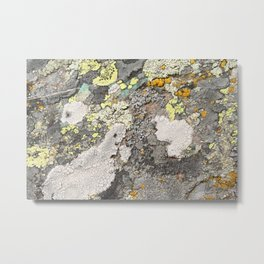 Lichen color Metal Print