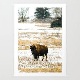 Bison · iii Art Print