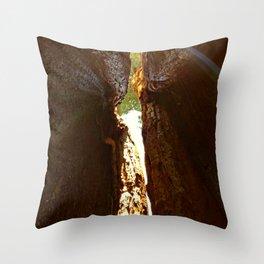 Light Breaking Thru Redwoods Throw Pillow