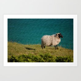 Irish Sheep Art Print