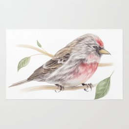 Bird - Male Common Redpoll Watercolour by Magda Opoka Rug