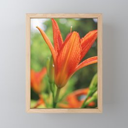Summer Lily IV Framed Mini Art Print