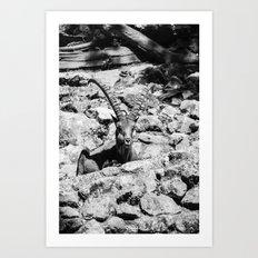 Kozorog Art Print