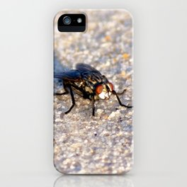 Watercolor Fly, House Fly 03, Janes Island, Maryland iPhone Case