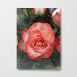 White to pink rose Metal Print