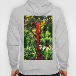 Alpinia purpurata – Red Ginger Flower, Nature in Bogota, Colombia Hoody