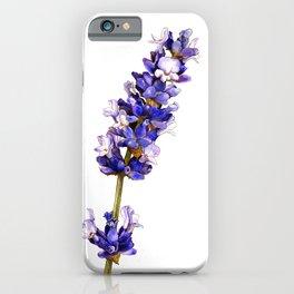 Mediterranean Lavender on White iPhone Case