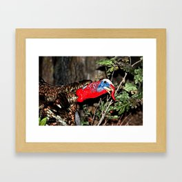 Wild Turkey Close Up Framed Art Print