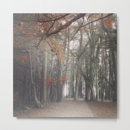 Light through the Cypress Metal Print