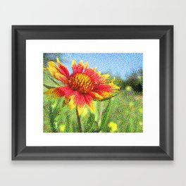 Red Flower in a Field Framed Art Print