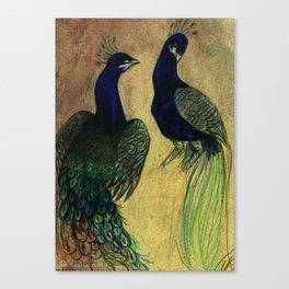 Peacock Drawing Canvas Print
