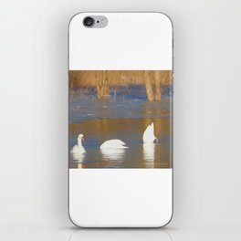 Swans see, hear & speak no evil iPhone Skin