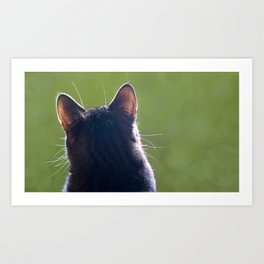 Cat Ears With Back-lit Whiskers Art Print