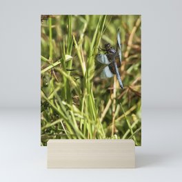 Common Whitetail Dragonfly on a Blade of Grass Mini Art Print