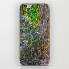 Beautiful rain forest growth iPhone & iPod Skin