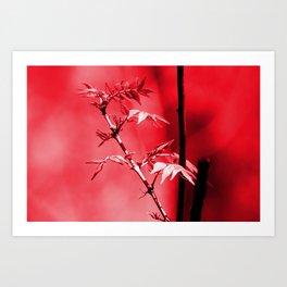Red leaf Art Print