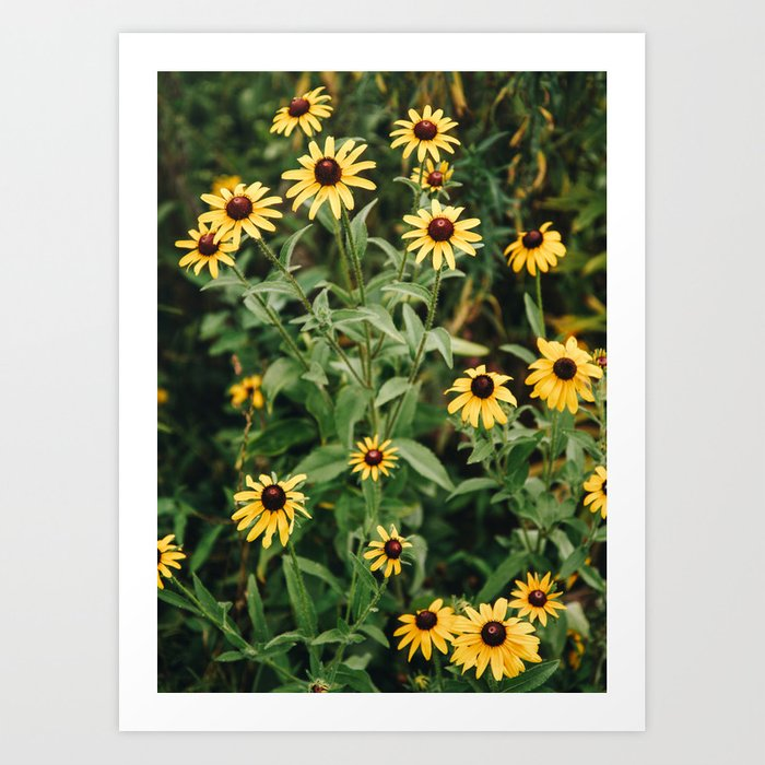 Daisies for You Art Print
