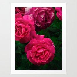 Blooming, Flora, Gande Dame, Hybrid Rose, Nature, Perennial, Pink Flower, Spring, Summer Art Print