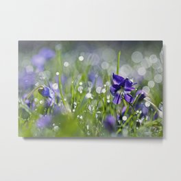 violet morning Metal Print