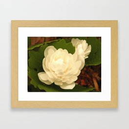 Double Bloodroot Framed Art Print