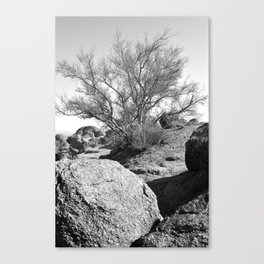 Arizona Mountain Top Tree Canvas Print