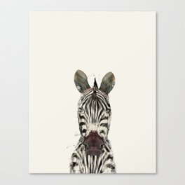 little zebra Canvas Print