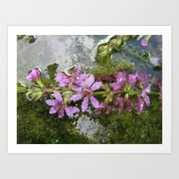 Flowers and reflections in water Art Print