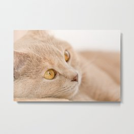 Dreaming cat Metal Print