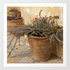 Courtyard Plants Art Print
