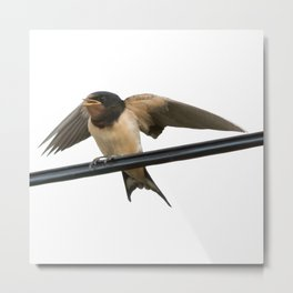 Swallow On A Wire Vector Metal Print