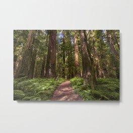 Walk In The Redwoods     7-29-17 Metal Print