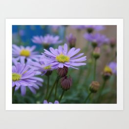 flowering. Art Print