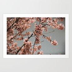 Cheery Cherry Blossoms Art Print