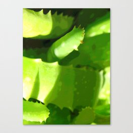 Aloe Abstract Canvas Print