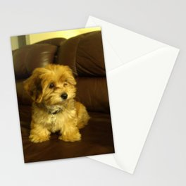 Cute photo of Copper as a puppy Stationery Cards