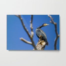 European shag - From the series 'Fly me to the Moon...' Metal Print