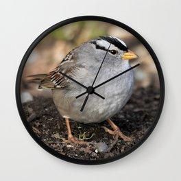 Profile of a White-Crowned Sparrow Wall Clock