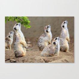 Meerkats - We're on the Lookout Canvas Print
