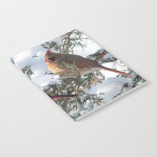 Sunny Winter Cardinals (square) Notebook