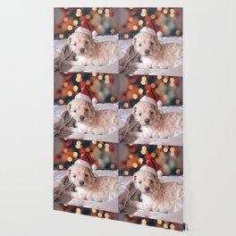 Santa Dog (Color) Wallpaper
