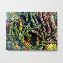 Sweet Green Algae Metal Print
