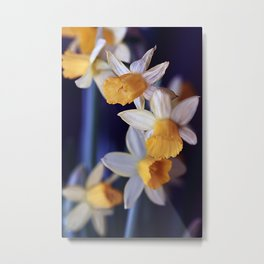 Narcisses (31) Metal Print